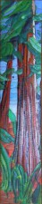 Redwoods V - Katiepm