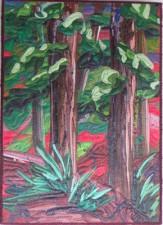 Redwoods VI - Katiepm